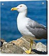 Two Seagull Acrylic Print
