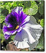 Two Shades Of Color Acrylic Print