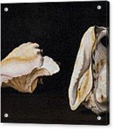 Two Shells Acrylic Print