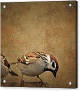 Two Sparrows Acrylic Print