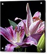 Two Star Lilies Acrylic Print