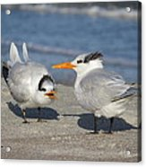 Two Terns Talking Acrylic Print