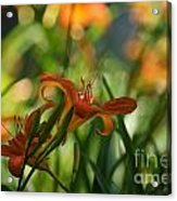 Two Tiger Lillies...   # Acrylic Print