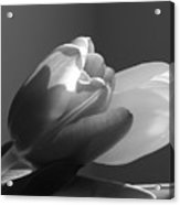 Two Tulips In Black And White Acrylic Print