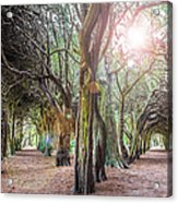 Two Tunnels Taxus Acrylic Print