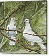Two White Doves Acrylic Print