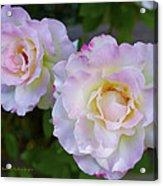 Two White Roses Border Acrylic Print