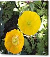 Two Yellow Flowers Acrylic Print