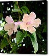 Twosome Bloom Acrylic Print