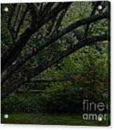 Tyler Tree 1 Acrylic Print