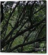 Tyler Tree 2 Acrylic Print