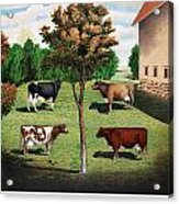 Typical Cows  Acrylic Print