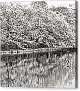 Ueno Park Sakuara Acrylic Print