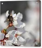 Ugly Pollinator Acrylic Print