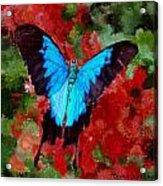Ulysses Butterfly Acrylic Print