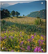 Umbria Wildflowers Acrylic Print