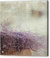 Unbearable Softness Acrylic Print