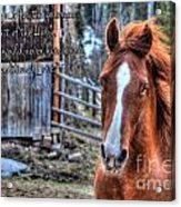 Unconditional Love Acrylic Print