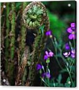 Uncurling Fern And Flower Acrylic Print