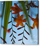 Under Below Acrylic Print