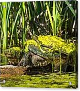 Under Covered Acrylic Print