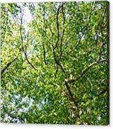Under Leaf Canopy Acrylic Print