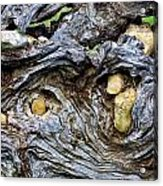 Under Roots Of Dead Tree Acrylic Print by Linda Phelps