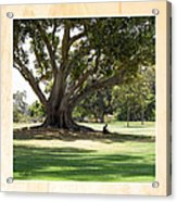 Under The Big Old Tree Acrylic Print