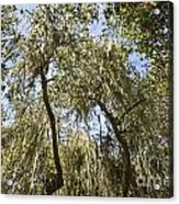 Under The Canopy - The Magical And Mysterious Trees Of The Los Osos Oak Reserve Acrylic Print