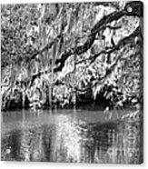 Under The Canopy Acrylic Print