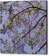 Under The Jacaranda Tree Acrylic Print