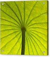 Under The Leaf Acrylic Print