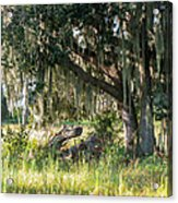 Under The Live Oak Tree Acrylic Print