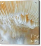 Under The Mushroom Acrylic Print