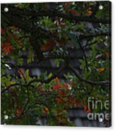 Under The Old Oak Tree Acrylic Print