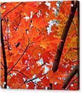 Under The Orange Maple Tree Acrylic Print by Rona Black