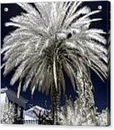 Under The Palm Tree Acrylic Print