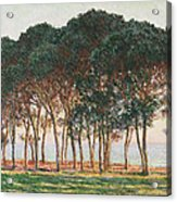 Under The Pines. Evening Acrylic Print