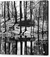 Under The Tall Trees Acrylic Print by Luke Moore