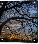 Under The Tree And Through The Fence Acrylic Print by Kelly Kitchens