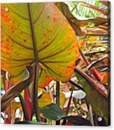 Under The Tropical Leaves Acrylic Print