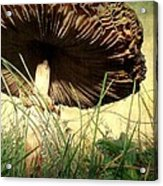 Underneath The Mushroom Acrylic Print
