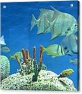 Underwater Beauty Acrylic Print