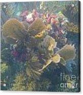 Underwater Colors Acrylic Print by Adam Jewell