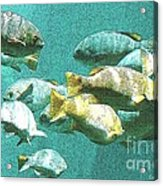 Underwater Fish Swimming By Acrylic Print
