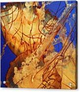 Underwater Friends - Jelly Fish By Diana Sainz Acrylic Print