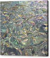 Underwater - Long Boat Tour - Phi Phi Island - 011326 Acrylic Print