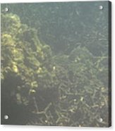 Underwater - Long Boat Tour - Phi Phi Island - 011338 Acrylic Print