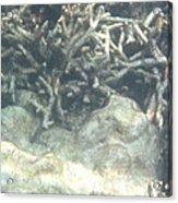 Underwater - Long Boat Tour - Phi Phi Island - 011340 Acrylic Print