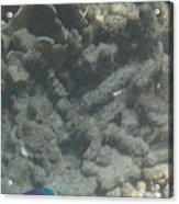 Underwater - Long Boat Tour - Phi Phi Island - 011356 Acrylic Print